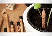 sprout-matita